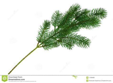 christmas tree branch royalty free stock photos image