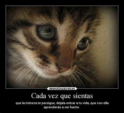 imagenes gatos tristes imagenes triste de gatos imagui