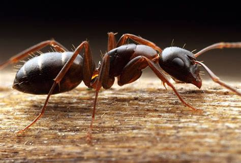 related image ants bugs insects