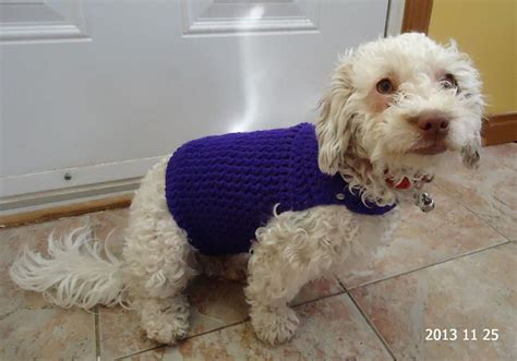 free pattern dog sweater 301 moved permanently