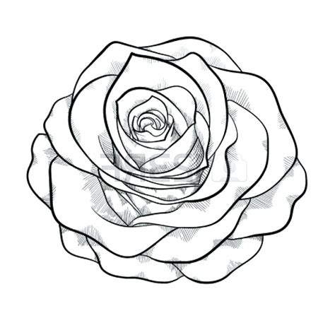 Rose Outline Rose Drawing Outlines Outline Kid Marvellous Roses And Jpg Clipartix Outline Drawings For