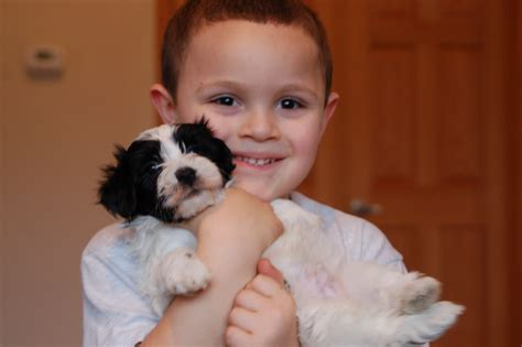 havanese and children time breeder royal flush havanese offers tips on fostering a successful