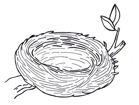 Birds Nest Coloring Page   sarah bell smith december 2011