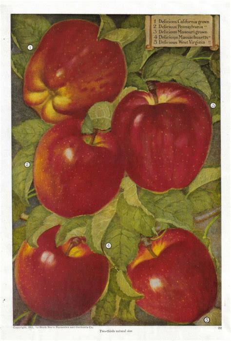 apple home decor apple kitchen decor catalogs fruit kitchen decor red
