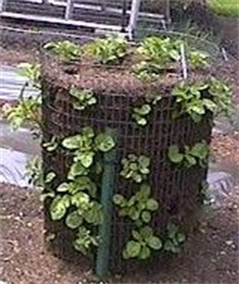 Vertical Potato Garden 1000 Images About Growing Up Trellises Towers And