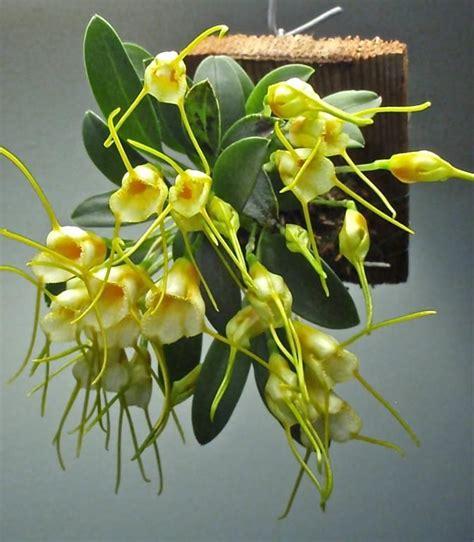 garden orchids and roses auf pinterest orchideen dfte 90 besten orquideas bilder auf pinterest g 228 rtnern