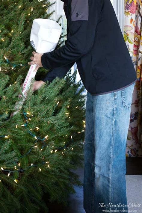 best way to water a christmas tree how to water a tree an easy diy tool the heathered nest