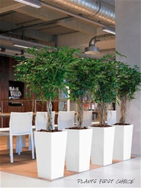 Mooie Planten Voor Binnen by Planten Botanico Specialist In Hydrocultuur
