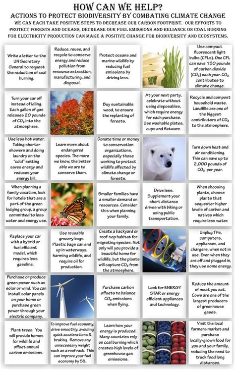 My Actions To Conserve Biodiversity Essay by 21 Best Images About Biodiversity On Extinct And What Is
