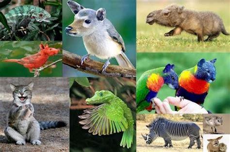 imagenes increibles gratis banco de im 193 genes animales incre 237 bles iv