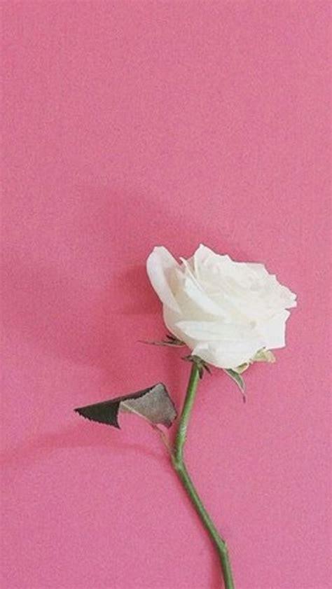 imagenes wasap rosa fondos para whatsapp fondo para whatsapp de rosa blanxa