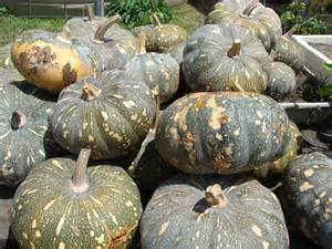 pumpkins australia pumpkin chutney abc hobart australian broadcasting