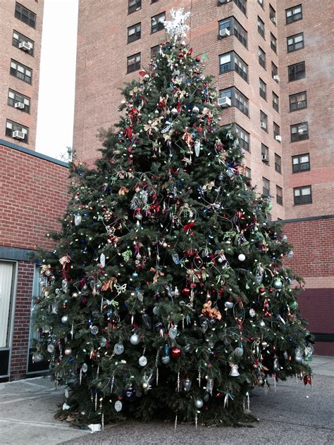 images of massachusetts christmas tree association