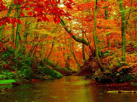 autumn forest river desktop background hd wallpapers