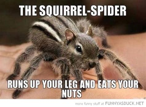 Funny Squirrel Memes - 30 very funny squirrel pictures