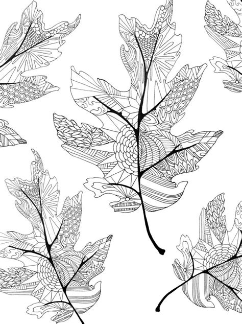 leaves coloring pages for adults 17 best images about adult colouring trees leaves