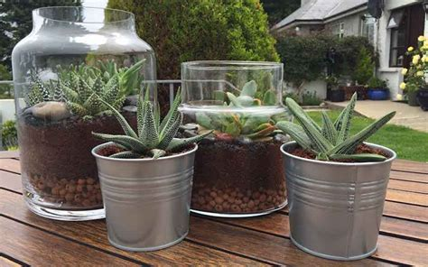 8 steps to making a terrarium pikalily lifestyle blog