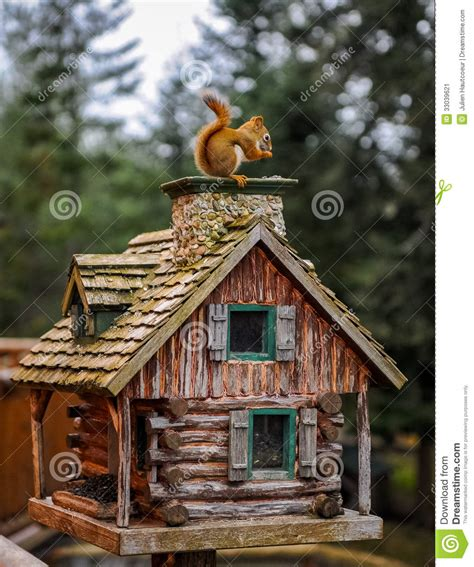 squirrel the house from up the squirrel on the wood house stock image image 33039621