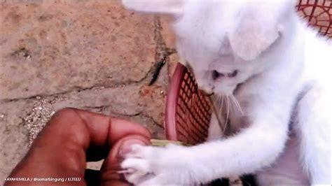 Keranjang Kucing bermain tali dengan kucing dalam keranjang