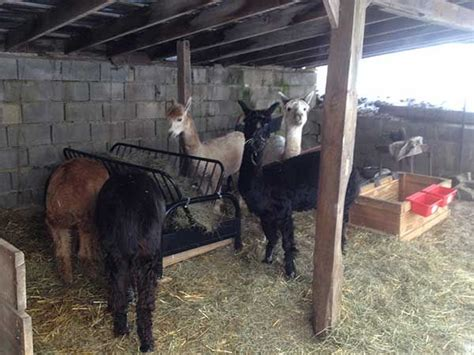 Futon Hay Feeder by 1000 Ideas About Hay Feeder On Goats Goat