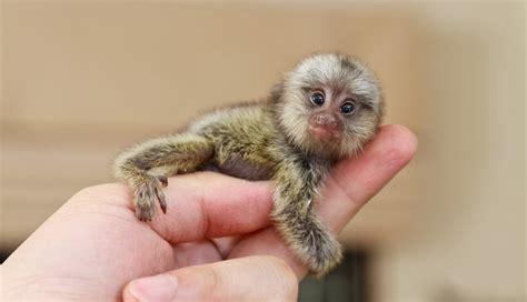 tiny tainy teeny tiny animals you can t believe are even real the dodo