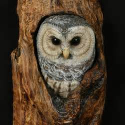 Executive Desk For Sale Mg Barred Owl Hand Carved