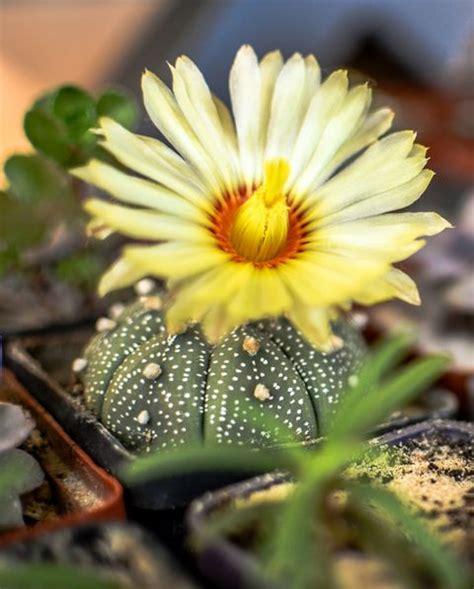 types  cactus  types  indoor