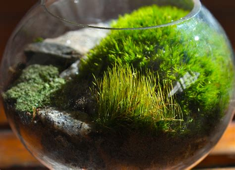 moss terrariums pedagogy of the plants