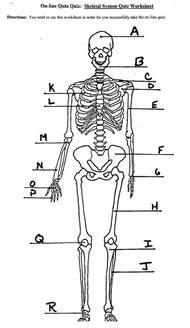 skeleton labeling worksheet worksheets reviewrevitol