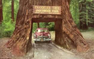 Formations Chandelier Strange Tree Houses Redwood Trees Sequoia S