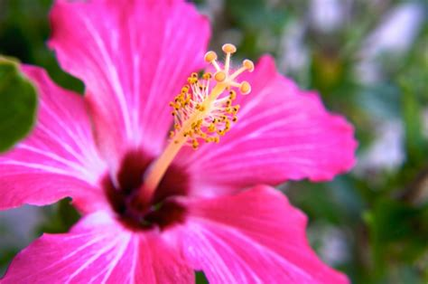 pistillo fiore ste artistiche quadri e poster con fiori natura