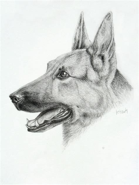 how to draw a german shepherd german shepherd drawing by brithawk on deviantart