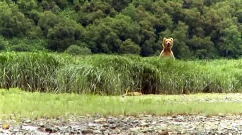 National Geographic Wildlife nat geo wildlife driverlayer search engine