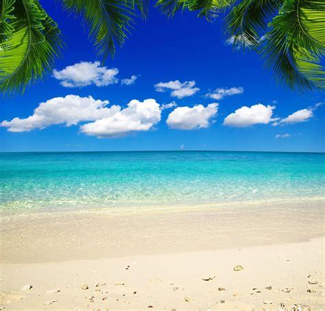 sea beach backdrop seaside tropical ocean wedding