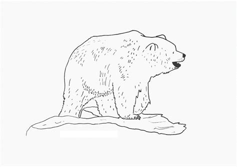 coloring pages of panda bear free printable bear coloring pages for kids