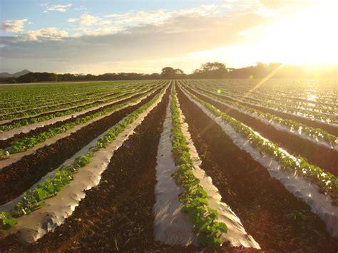 Brazilie Costa Rica Costa Rica Quot Grootste Concurrent In Meloenenmarkt Dit