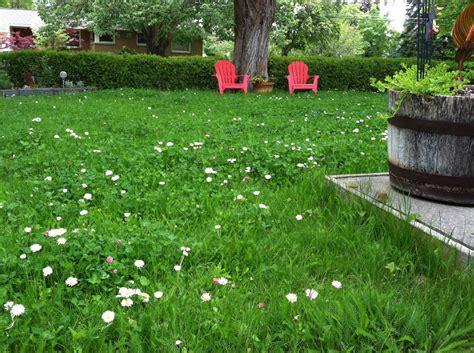 mellow meadow replaces lawn the spokesman review