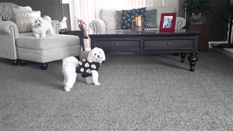 living room grey carpet living room grey  examples