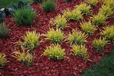 dyed mulch vs regular mulch using colored mulch in gardens