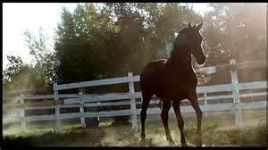 Mustang Horse Black Flicka 3 40 Abo Special Youtube