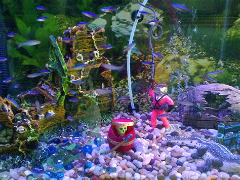 Neon Aquarium Decorations by Pictures Of Aquariums With Ornaments Including Rocks And