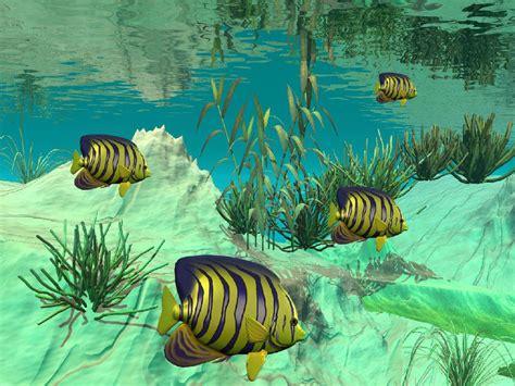 gambar wallpaper alam bawah laut wallpaper pemandangan bawah laut 1000 fakta unik dan menarik