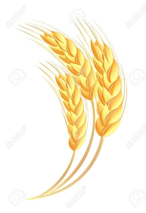 wheat clip wheat spike clipart clipground