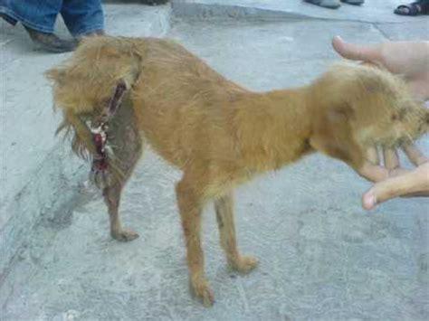 imagenes animales maltratados maltrato a los animales youtube