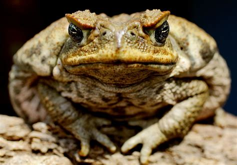 what is the difference between a frog and a toad the