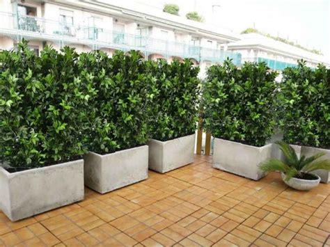 siepe in vaso per terrazzo best siepe in vaso per terrazzo photos idee arredamento