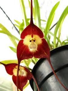 monkey orchid information hub of besties national geographic wonders of the world bora bora colosseum