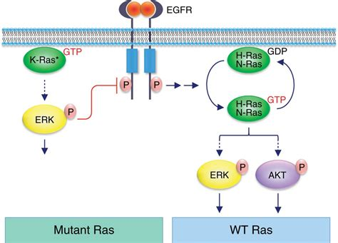 h ras protein mutant and type ras co conspirators in cancer