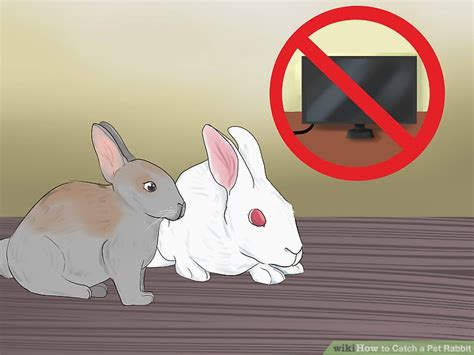 beautiful bunny yard art wire frame ideas electrical
