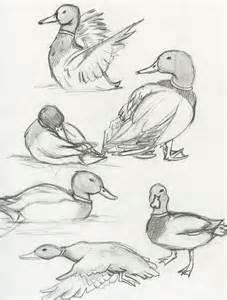mallard duck ebestiary